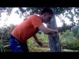 Лайфхак. Как спасти дерево от тли муравьёв и насекомых с помощью обычного скотча.