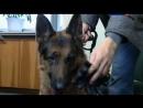 Т/С Лорд Пёс - полицейский 15 серия 2013г