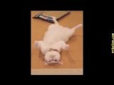 Без кота и жизнь не та 2016 - 2017! Лучшие и самые смешные приколы с котами и кошками