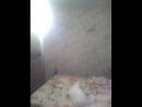 охота на летучую мышь в 3-50 23.07.2017 г. ночи в спальне