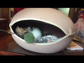 Pet cat cave