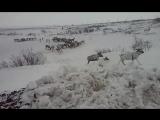 По дороге на Воркуту