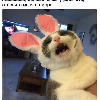 Дмитрий Недвижаев