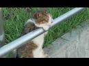 кот взгрустнул