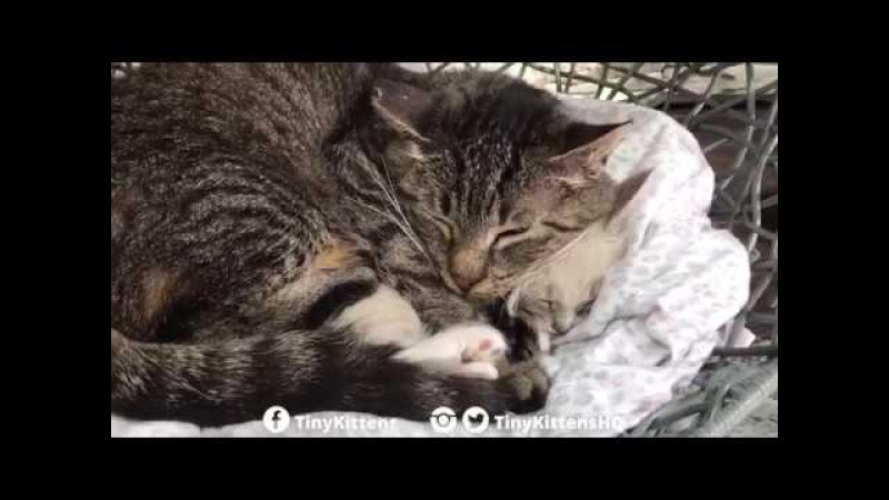 Ancient feral cat hugs tiny kitten - starring Grandpa Mason and Lucy - TinyKittens.com