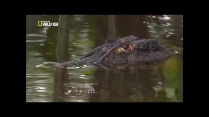 Амазонка -Колыбель жизни .Дикий мир .Документальный фильм.National Geographic