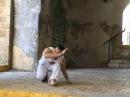 Negativa, Capoeira technique from the Akban-wiki