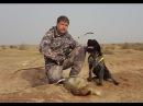 Цикл Таджикистан охотничий 3 серия Охота на зайца и барсука в Таджикистане с лу ...