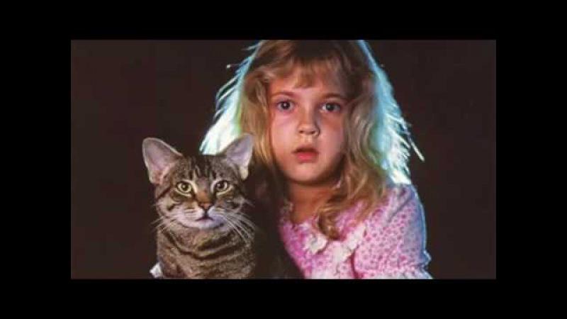 Фильмы о кошках ХХ века топ 10 Movies about cats of the twentieth century top 10