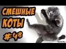 Смешные коты и кошки ДО СЛЁЗ Приколы с Котами 2017 Видео про котов