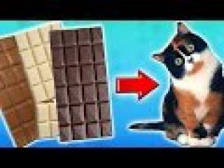 Гигантский Шоколадный КУКИ с канала СЛИВКИ ШОУ