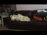 Собакен будит своего друга