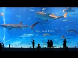 Spanish history - Love Story ЕвроВидео Love story, Свадебное видео, История знакомства, Видеосъемка свадеб, Свадебный фильм