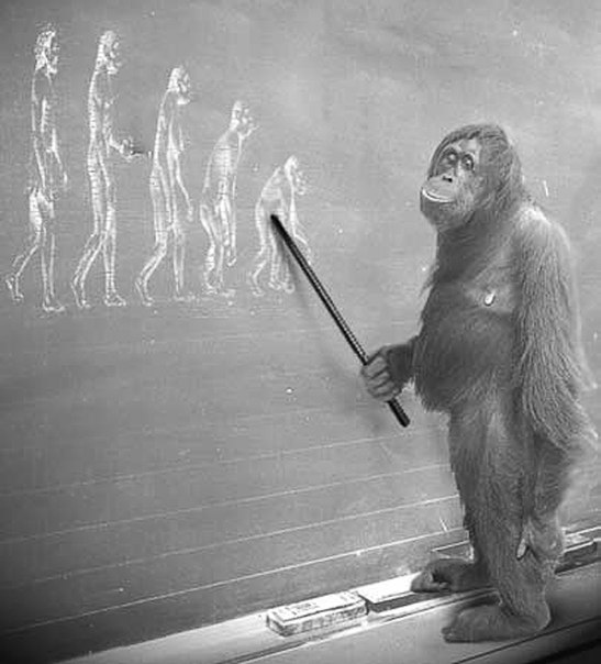 evolution of orangutans In this post we discuss the evolution of the great apes  crown-group hominids include orangutans, gorillas evolution basics: from primate to human, part 1.