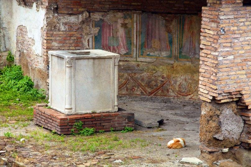 Римские кошки