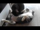Детки у кошки Моны подросли