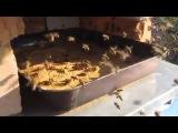 Весенняя, белковая подкормка пчел заменителями пыльцы