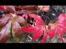Южная Территория - Красная поляна - осень - тропа здоровья