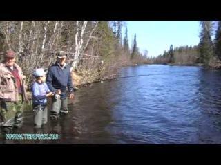 Рыбалка на Кольском. Ребенок поймал семгу. 2013 год. Кольский. Терский берег. Река И...