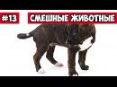 Собака на качеле, эти смешные животные 13, | Bazuzu Video ТОП подборка май 2017