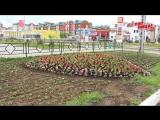 Более 100 тысяч цветов украсят Нефтекамск
