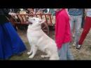 собака-компаньон Коломенское
