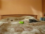 Котенок и страшные яблоки