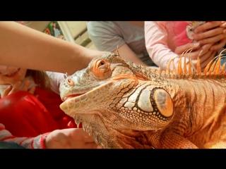 Выставка экзотических животных