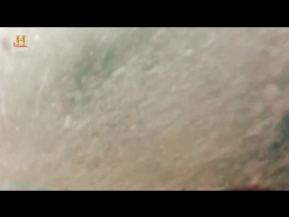 History «Акульи пастухи (01). Поймать убийцу» (Реальное ТВ, 2012)