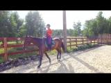 Добрая лошадка (Праздник