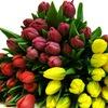 Тюльпаны в Тюмени к 8 марта - Рассада в Тюмени