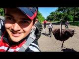 Велопокатушка на Страусиную ферму