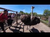 Обзор Страусиной фермы под Сумами в. Сыроватка