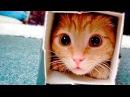 Приколы с Котами Смешные коты и кошки 2017 Смешное Видео Корпорация Зла