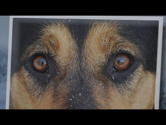 НЕ у каждого дома должна быть собака,но у каждой собаки должен быть свой дом!