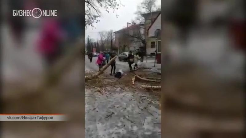 В Казани упавшее дерево придавило человека