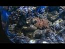мурена-зебра и ядовитые рыбы-крылатки