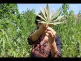 Morocco's Hashish Industry
