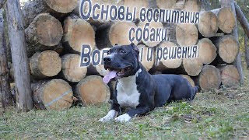 4 основных элемента воспитания собаки Даня Боб Основы воспитания собаки