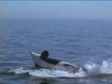 Освободите Вилли 3: Спасение 1997 трейлер
