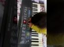 Piyanist şantör