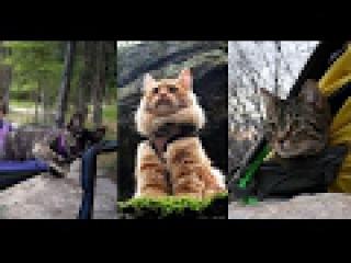 С любимыми не расставайтесь или коты в путешествии!