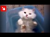Кот принимает ванну!  Смотреть видео онлайн в Моем Мире.