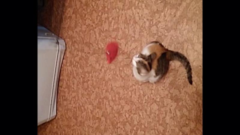 Маргоша с игрушкой в ожидании дома!