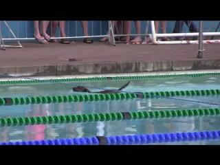 Внимание!! Топ пловец 🐶 на дорожке 🏊 😆