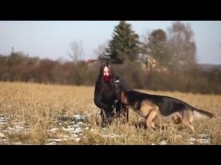 Немецкая овчарка команды на 5