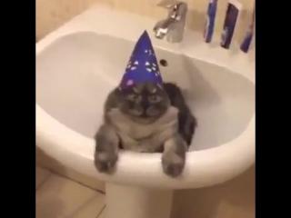 Волшебный кот