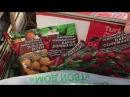 Моя Теплица 17 марта первые всходы , высаживаю томаты в грунт