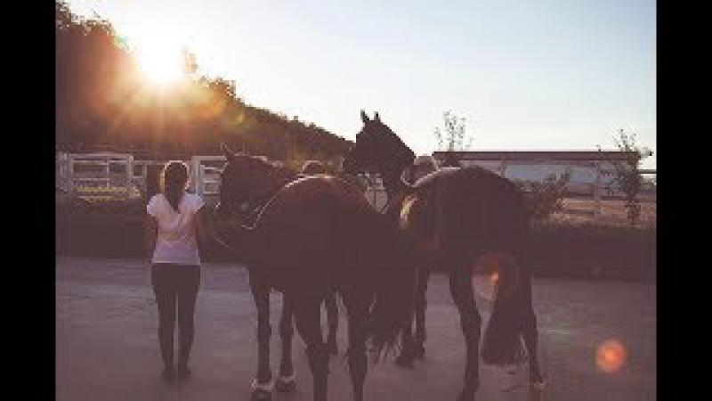 ~ Equestrian sport ~ Жить в кайф ~ Конный спорт ~