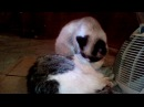Наш кот грязнуля и лентяй!Приколюшка!Our cat muddy and lazy! Funny!